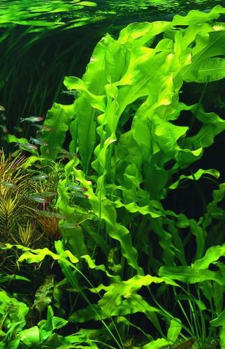 Морские водоросли - Позвоночник.инфо