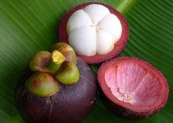 Что такое мангустин для похудения